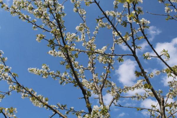 Весна на пасеке Медовый Крым