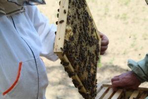 Весенний осмотр пчёл