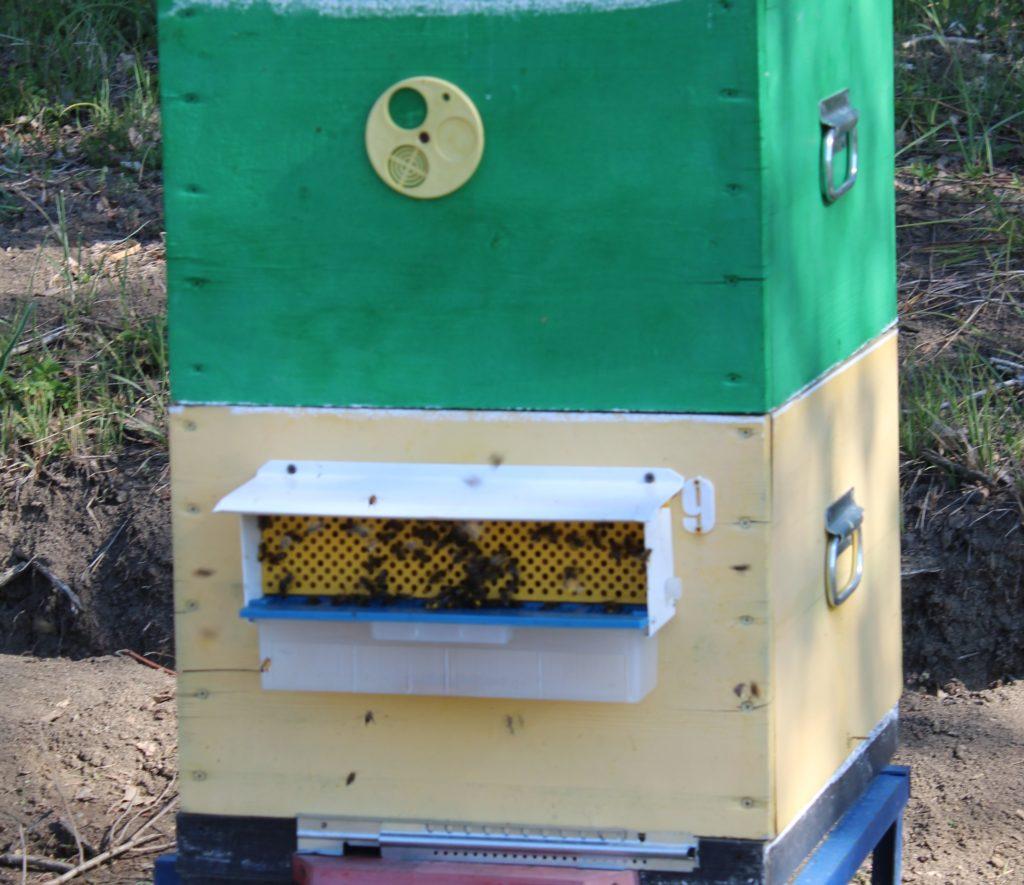 Пыльцеуловитель на улье