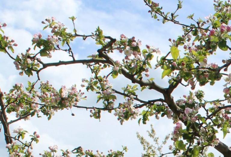 Пасека Медовый Крым в саду