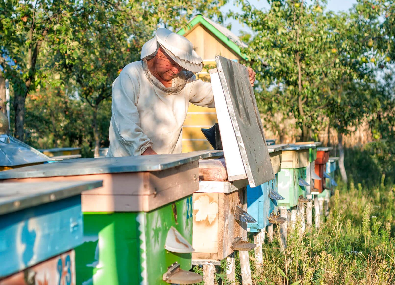 Сила Белогорского мёда из Крыма. Фото